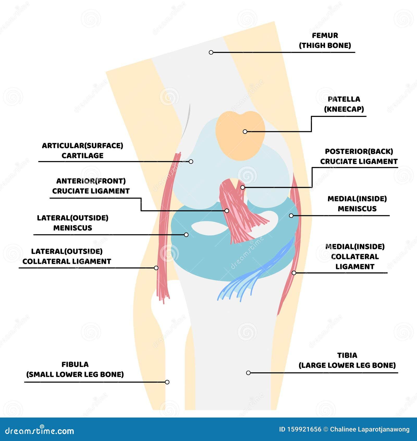 Durerile articulare: cauze, diagnostic, tratament, Tratament articular balacal