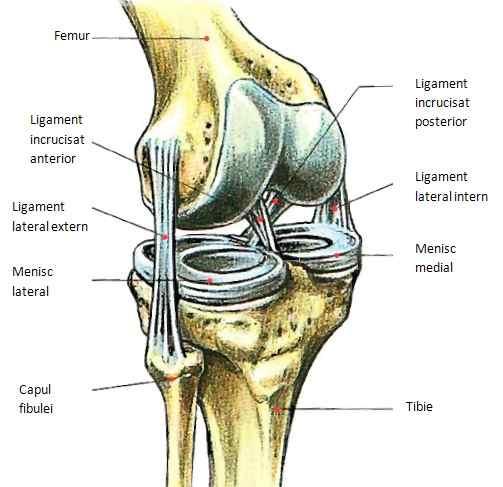 Tratarea ligamentelor și a articulațiilor genunchiului