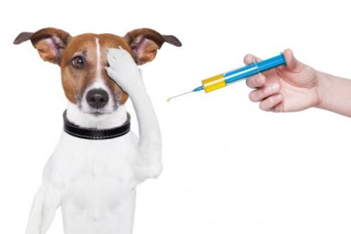medicină veterinară comună tratament după luxația articulației