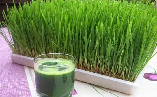 Iarbă de grâu pulbere Eco, Purasana, 200 g