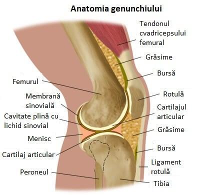 dureri de genunchi la mersul tratamentului