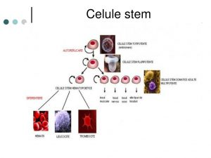 Terapia cu celule stem, utilizată în boli articulare și medicina estetică