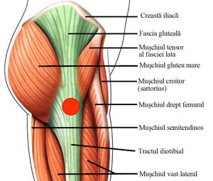 durere sub articulația șoldului
