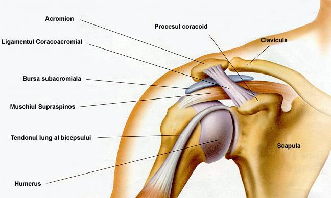 durere ascuțită a cusăturii în articulația umărului