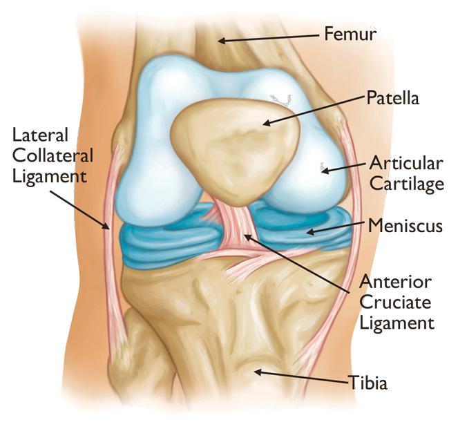 articulația genunchiului a zburat afară