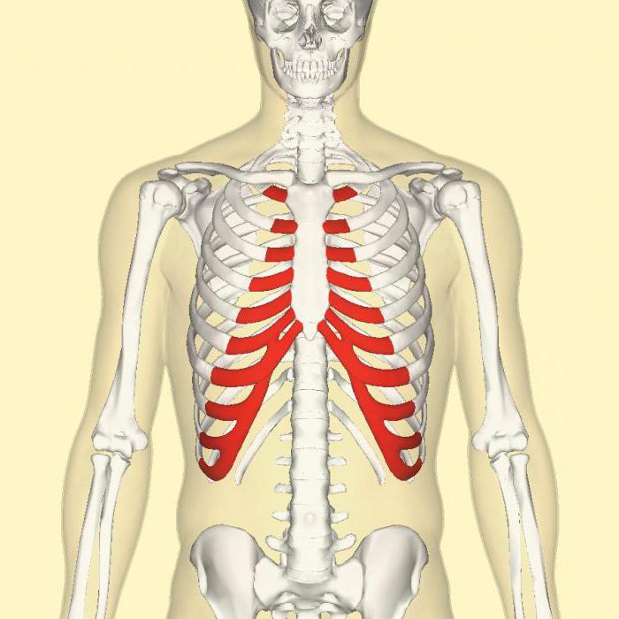refacerea proteinei țesutului cartilaj