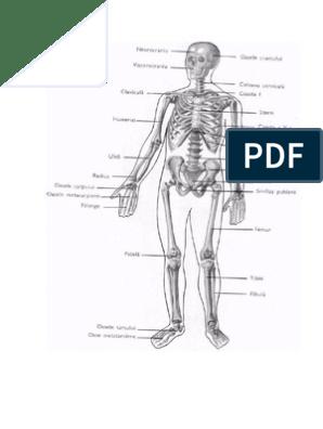 Dureri musculare (mialgia): cauze, manifestari si remedii