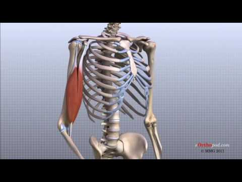 Unguent din articulațiile chiropractice