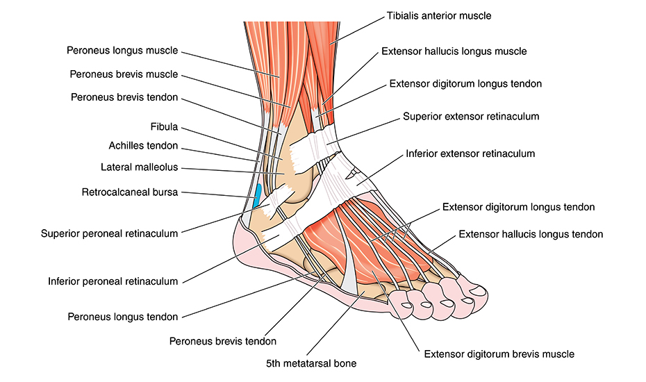 începerea durerii în articulațiile gleznei cum se tratează articulațiile și vasele de sânge