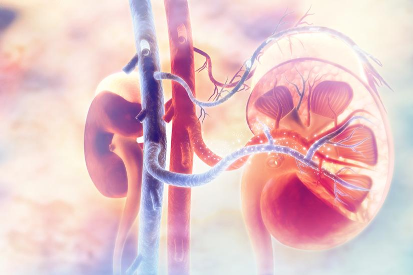 rinichi și articulații dureroase mag 30 în tratamentul artrozei