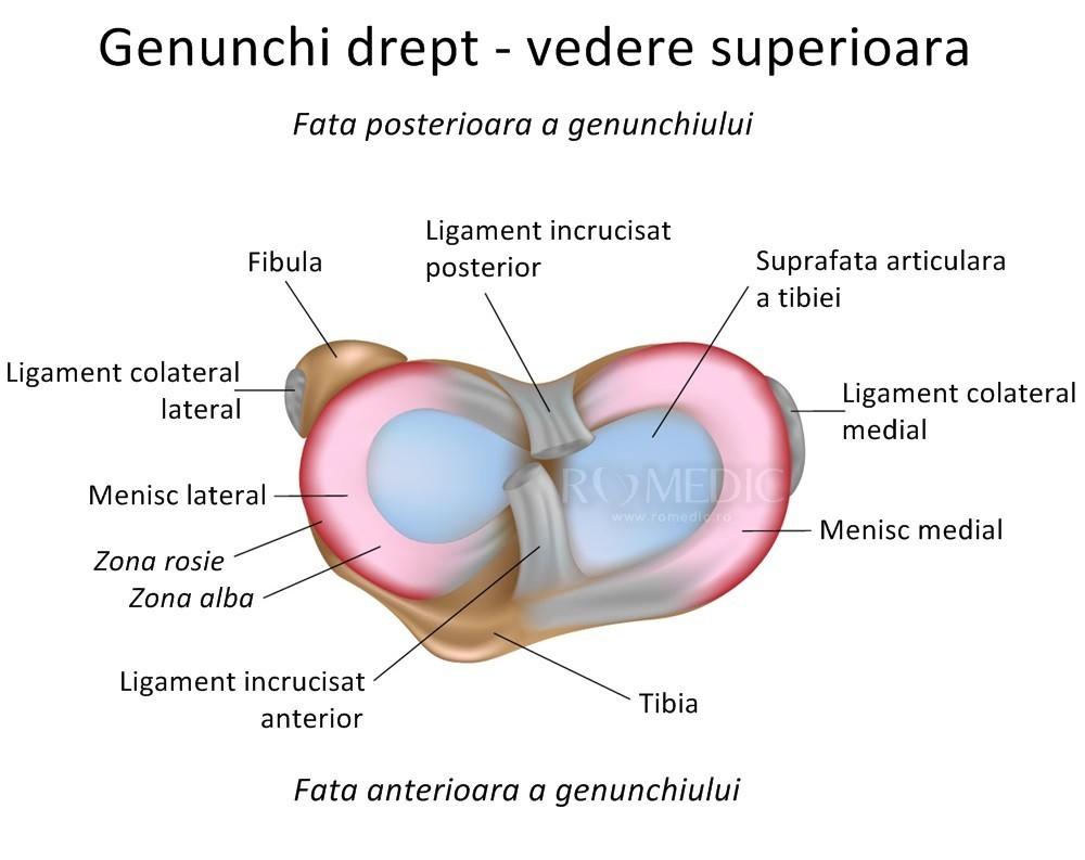tratamentul articulațiilor și ligamentelor