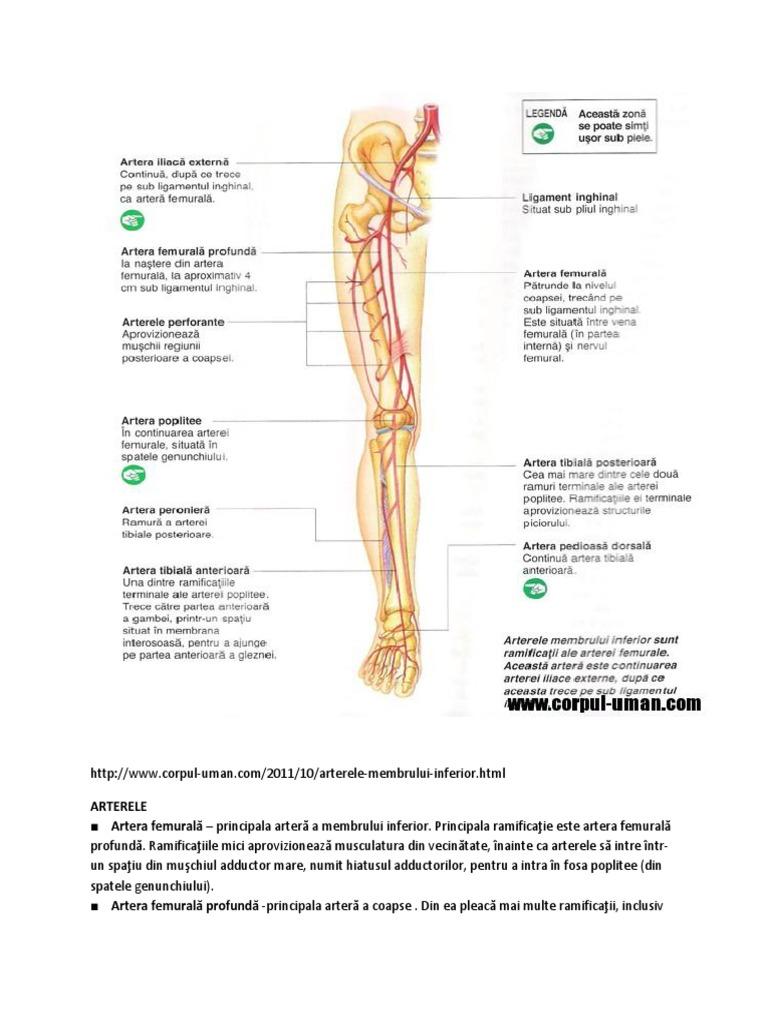 Ce este boala arterială periferică (arterita) - articol de Asist. Univ. Dr. Ruxandra Negoi
