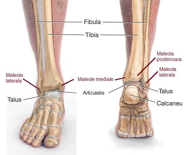 articulația exterioară a gleznei doare cum să vă încălziți picioarele cu dureri articulare