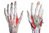 articulația din fața mâinii doare