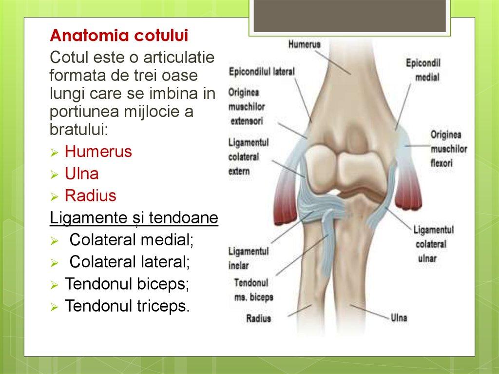 tratament nechirurgical al tratamentului cu artroză articulară cum să tratezi entorsa încheieturilor