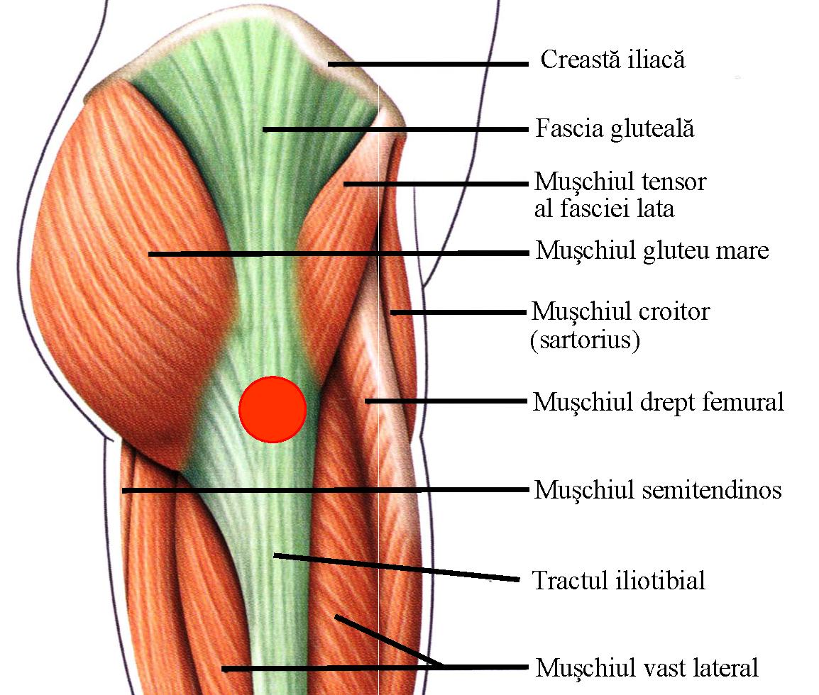 durere în timpul mersului articulației șoldului stâng