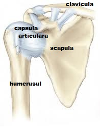durere plictisitoare la nivelul articulațiilor umărului tratamentul artrozei în yask