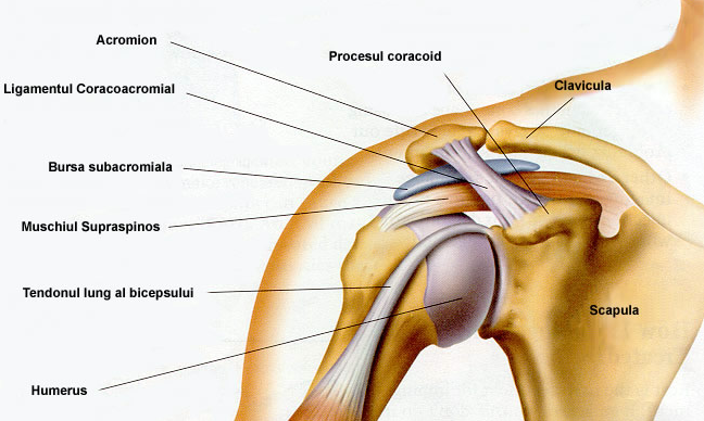 cât de mult este tratată displazia de șold artrita reactivă a genunchiului