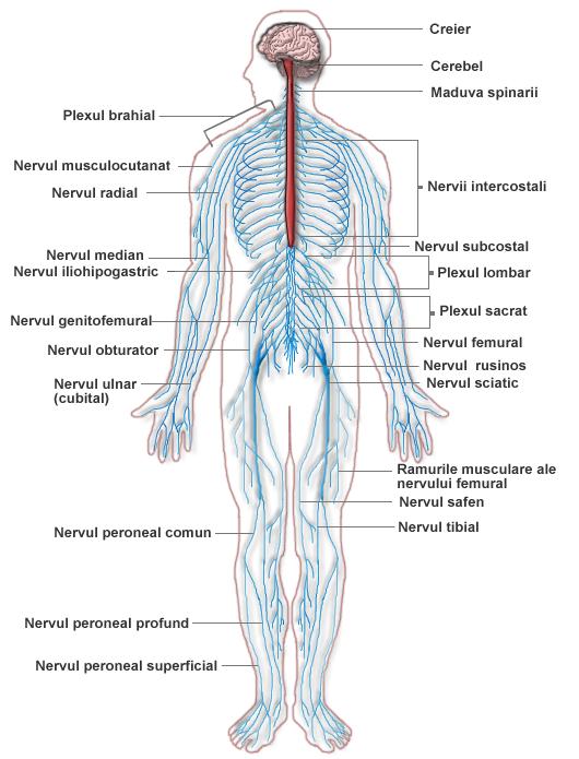 durerea articulară poate fi cauzată de cancer