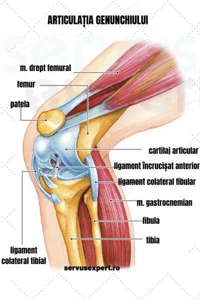genunchii răniți, articulațiile se crispau