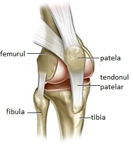 gonartroza bilaterală 3 grade ale tratamentului articulației genunchiului boli de cartilaj ale coloanei vertebrale