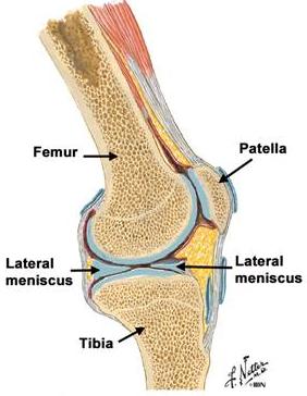leziuni la nivelul articulațiilor genunchiului cartilajul bolii articulației genunchiului