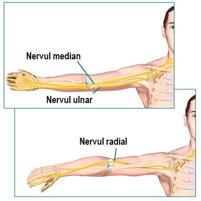 nervul din articulația cotului doare