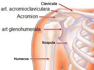 recenzii ale tratamentului rupturii ligamentului umărului cum să tratezi o articulație la picior