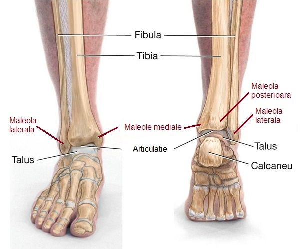 termen de tratament pentru fractura de glezna