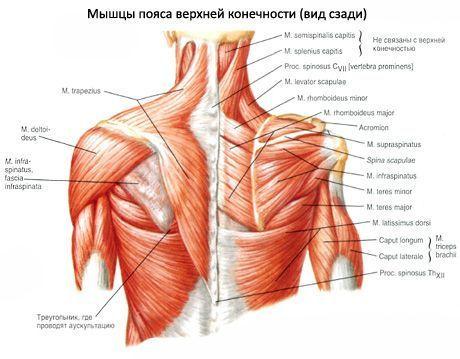 Tratamentul rupturii buzei articulare a articulației umărului - tranzactiiimobiliareonline.ro