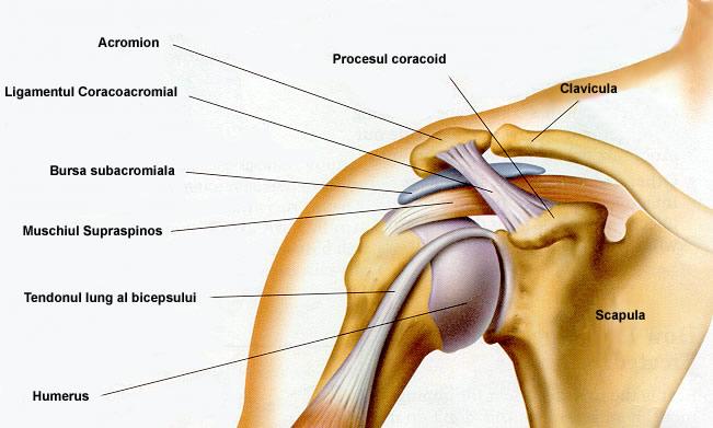 articulația dureroasă a umărului