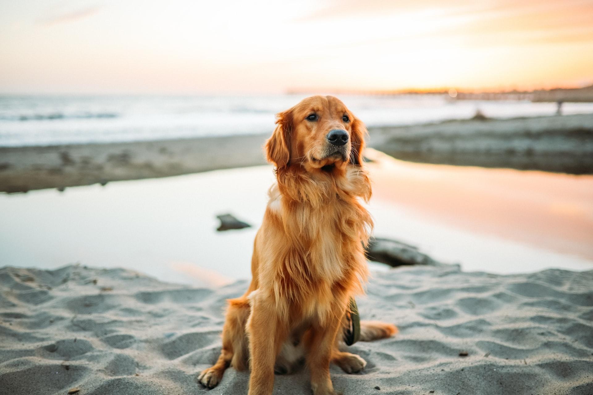 Pentru artrita canina suplimente