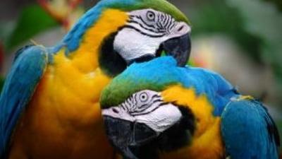 Artroza într-un tratament cu papagal, Coșul dumneavoastră este gol