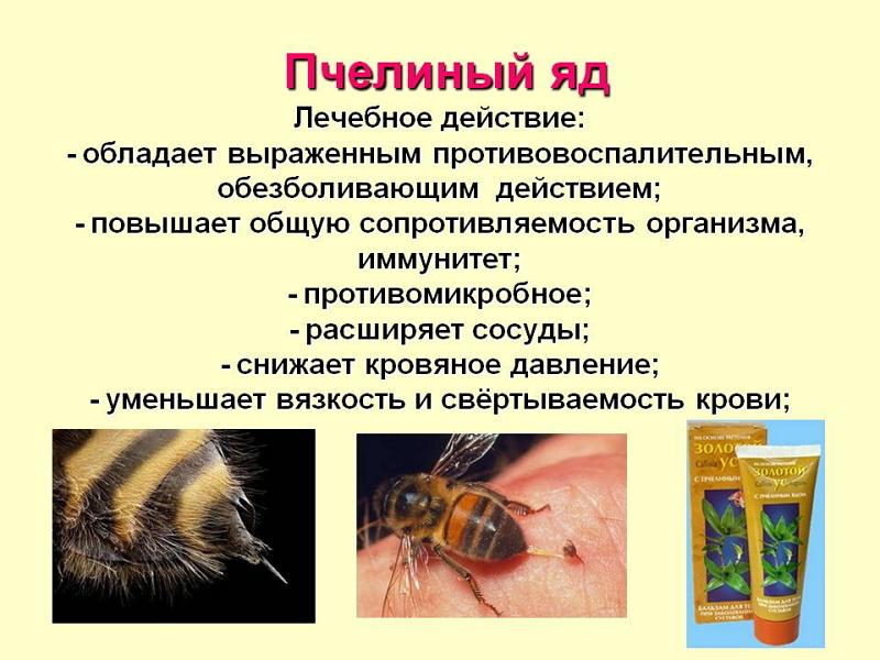 tratament pentru artroza cu intepături de albine