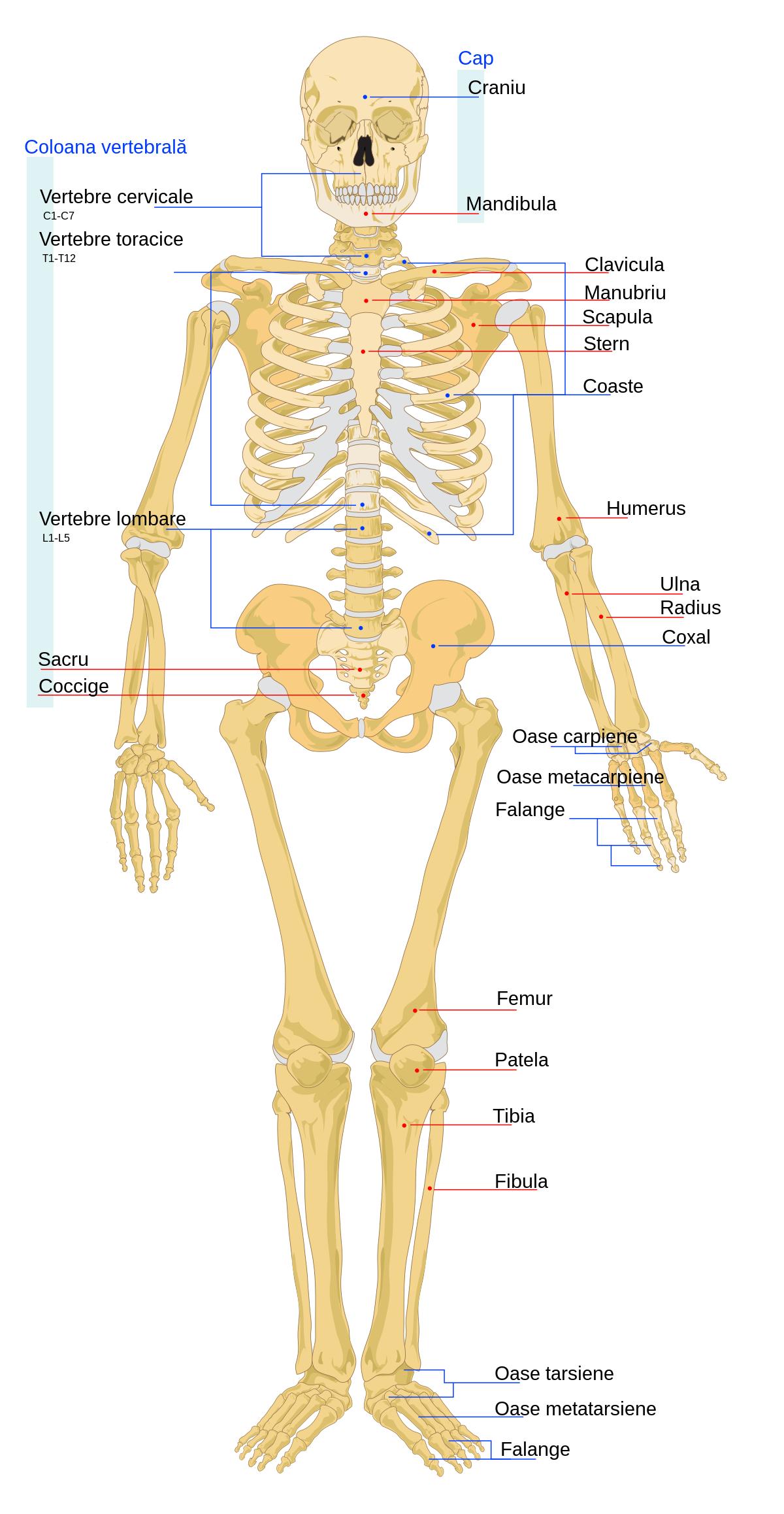 articulațiile pe mâini rănite de frig boli ale articulațiilor masculine