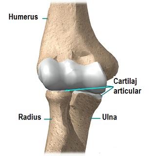 durere articulară a cotului sens disconfort în articulațiile genunchiului