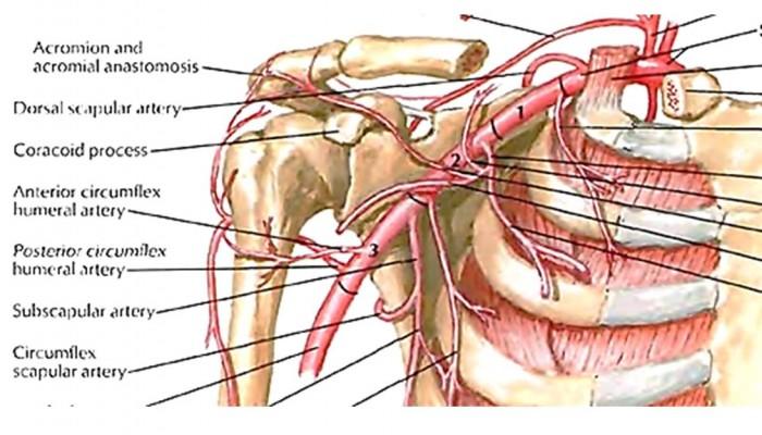 dureri articulare după exercițiu