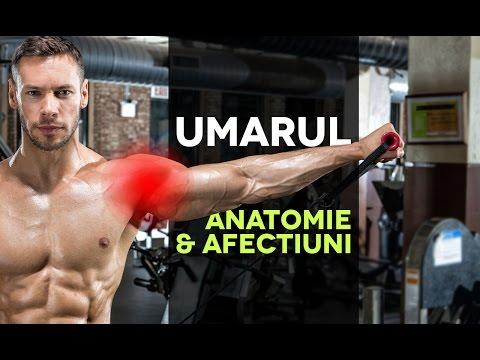 Dureri de cusături în mușchi și articulații - Tratamentul articulațiilor artritei