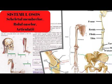 articulațiile rănesc genunchii