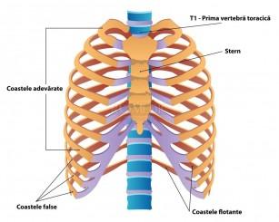 Când este necesară RMN? - Dr. Gavrilă - chirurg ortoped