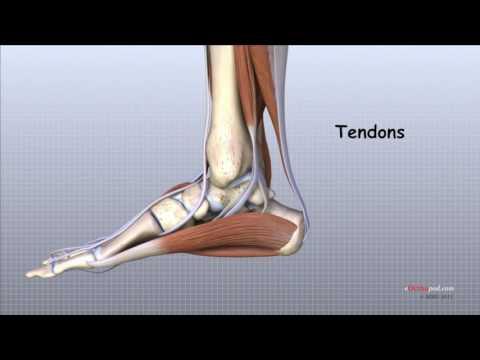 umflarea piciorului în articulația gleznei Kenalog 40 recenzii pentru artroza genunchiului