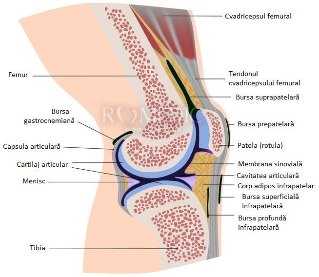 localizarea durerii în articulația genunchiului